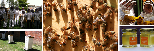 Champlain Apiary Photos from 2013