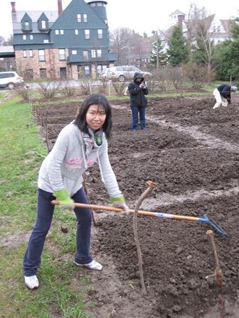Community Garden Sustain Champlain Champlain College